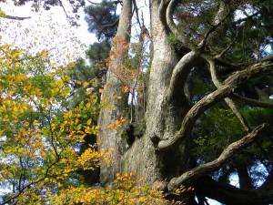 2010-10-27 池巡りと白鳥山 021