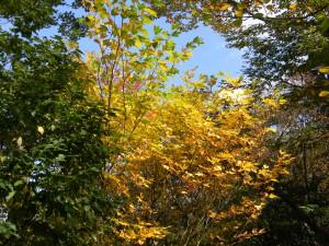 2010-10-27 池巡りと白鳥山 019