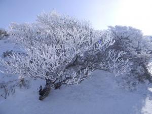 2011 1-26 韓国岳 008