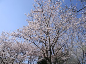 2011 4-6 健康の森 002
