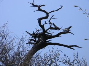 2011 4-20 白鳥山と池巡り 017