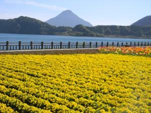 2011 4-13 開聞岳 035