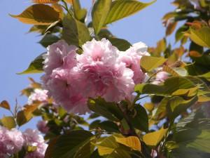 2011 4-13 開聞岳 005