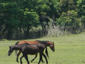 2011 5-18 栗野岳 017