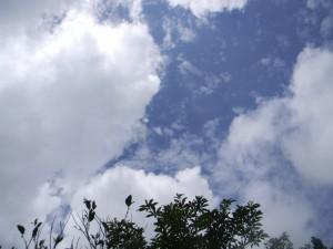 2011 6-22 栗野岳 006