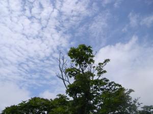 2011 6-22 栗野岳 005