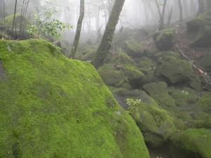 2011 7-20 甑岳 005