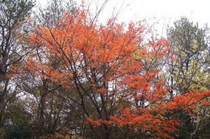 2011 11-2 えびの高原 001