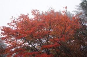 2011 11-2 えびの高原 022