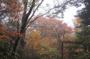 2011 11-2 えびの高原 038