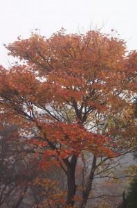 2011 11-2 えびの高原 023
