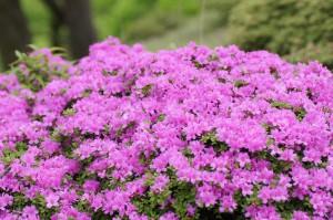 2012 5-30 白鳥山~不動岳 049