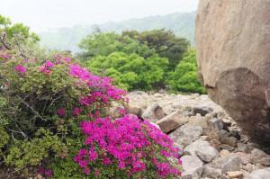 2012 5-30 白鳥山~不動岳 027