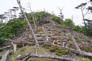 2012 5-30 白鳥山~不動岳 067